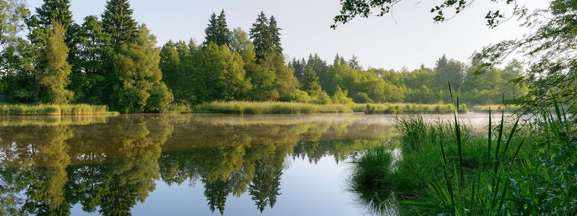 Pre Planning | Willowcrest Park