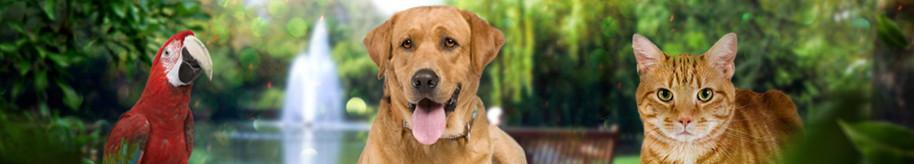 Grief & Healing | Friendship Pet Memorial Park