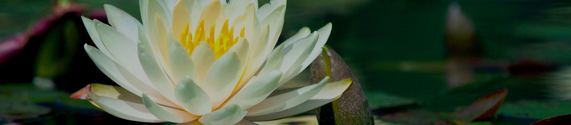 Resources | North Little Rock Funeral Home and Cremation Service