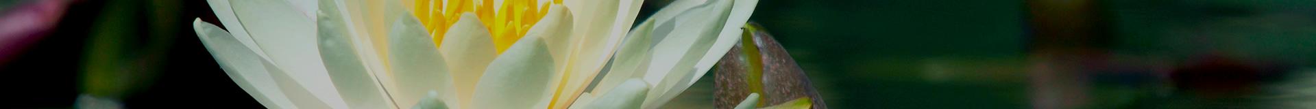 Resources | Thibodaux Funeral Home Inc.