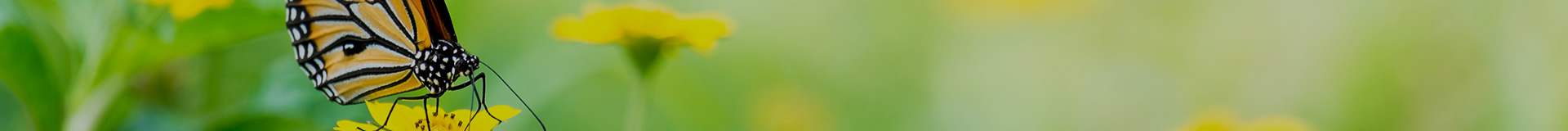 Contact Us | Cremation Society of New Jersey