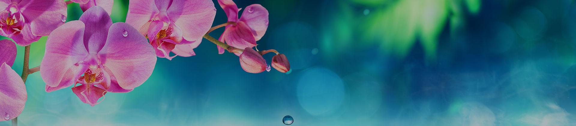 Grief & Healing | Premier Funeral Services