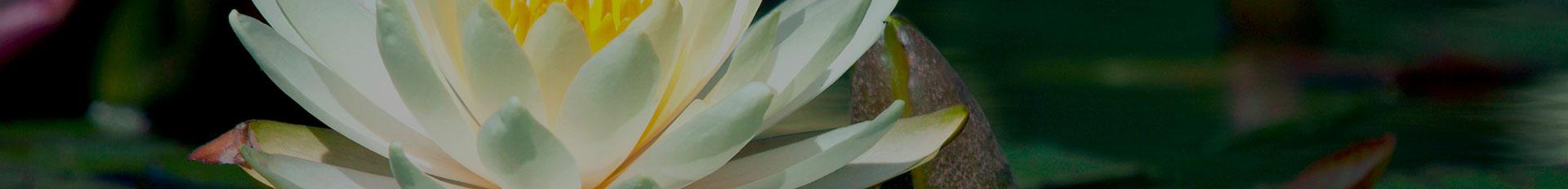 Resources | Pinecrest Memorial Gardens & Crematory
