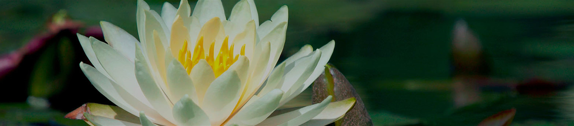 Resources | Reynolds Jonkhoff Funeral Home & Cremation Services