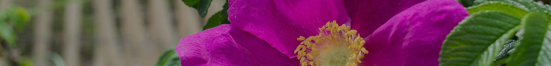 About Us | Gorgen Funeral Services