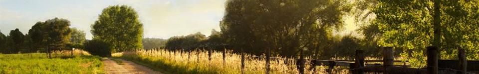Grief & Healing | Spengel-Boulanger Funeral Home & Dauderman Mortuary
