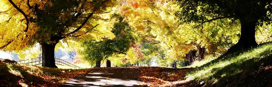 Grief & Healing   Preble Memory Garden Cemetery