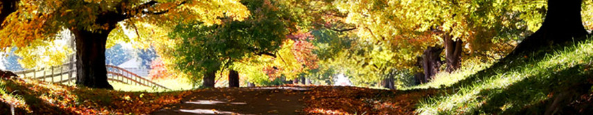 Grief & Healing | Ricketson Funeral Home