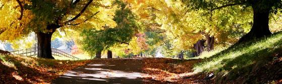 Grief & Healing | Daleiden Mortuary