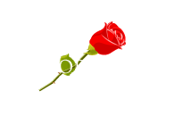 Memorial Park Funeral Home and Cemetery (FL)