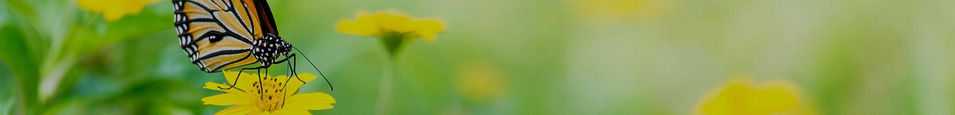 Mothe Funerals | Mothe Funeral Home