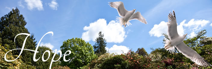 Contact Us | Hillside Memorial & Gardens