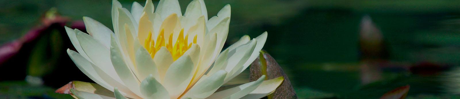 Resources | McKoon Funeral Home & Crematory