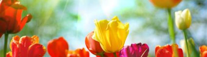 Resources   Higgins - Reardon Funeral Homes