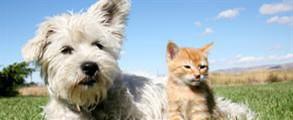 Adored Pets