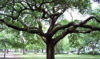 Lehigh Acres, FL Funeral Home