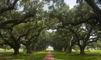 Louisiana Cultural Bearers