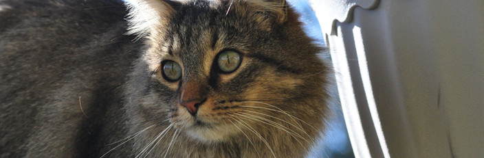 Grief & Healing | Purrfect Paws Pet Crematory