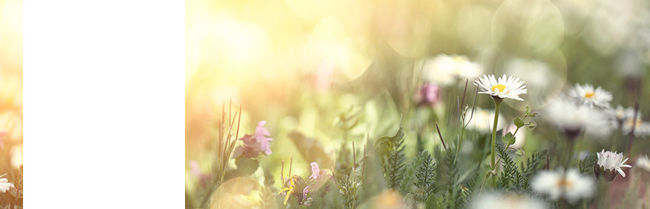 Grief & Healing | Randle-Dable Funeral, Cremation and Pre-Planning Services