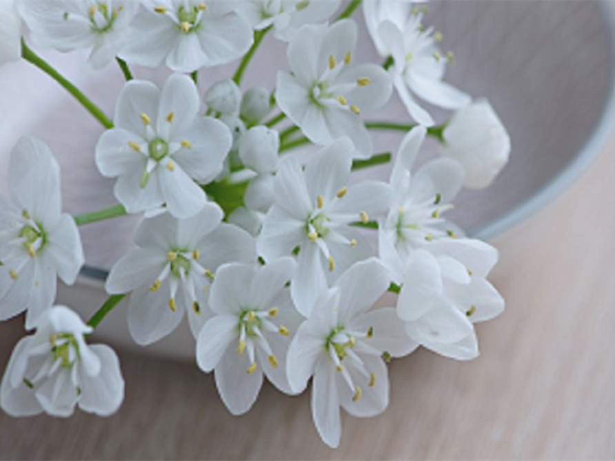 Funeral Homes and Cremation Services in Quincy, FL