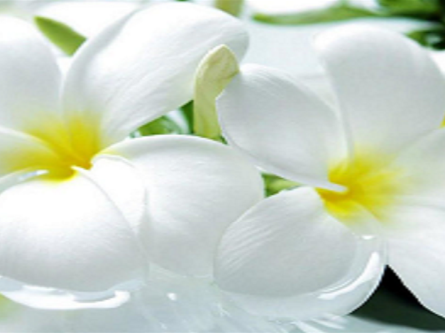 Funeral Homes and Cremation Services in Carrabelle, FL