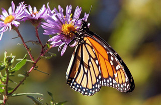butterflies in grand junction co