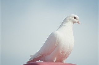doves release in funeral