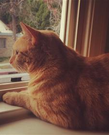 Monty the Mortuary Cat
