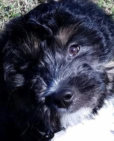 Digby O'Dog