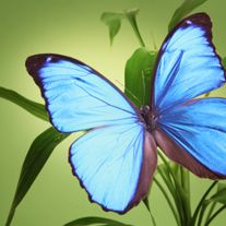 Linda Jane Smith