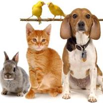 Pet Legacies Remembrance Event
