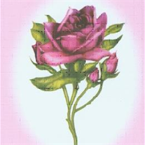 Rose A. Nannenga