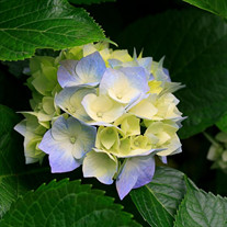 Denese  Flowers Uebelacker
