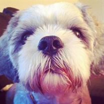 Turbo .