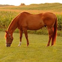 Shae (The Horse Lady) Goodman