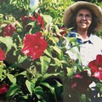 Lois Elaine Szumera