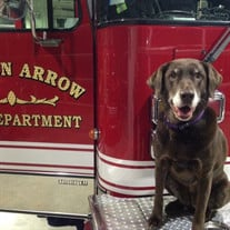 Cipher BA Fire Department Search & Rescue Dog